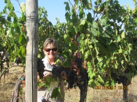 Grapes, Tuscany Italy