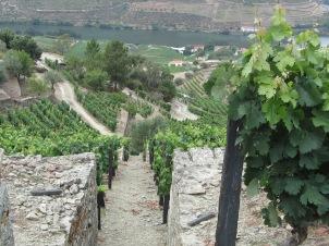 Douro Valley Winery
